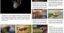 Download News Site 1.0.22 – Free WordPress Theme