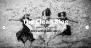 Download The Clean Blog 18.05.09 – Free WordPress Theme